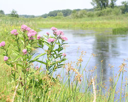 LaPorte County Soil & Water Conservation District - Beautiful Wetland