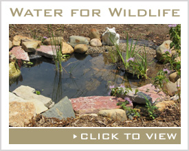 Water for Wildlife